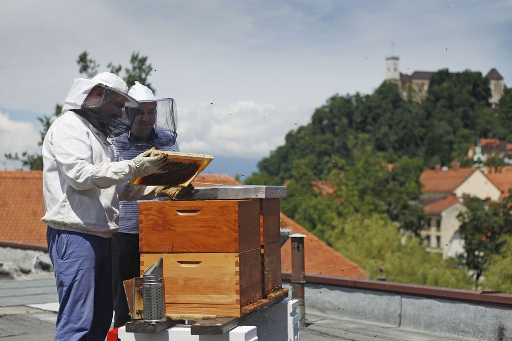 Čebelar skrbi za čebele, najemnik pa se pohvali z medom