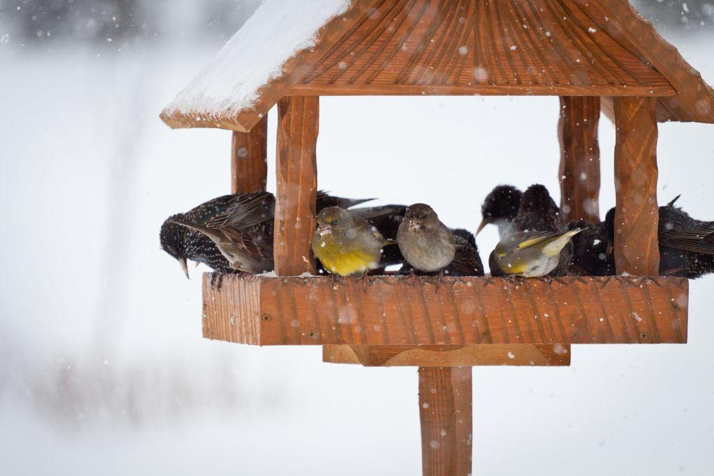 Dobro jutro: Samo ptičja krmilnica
